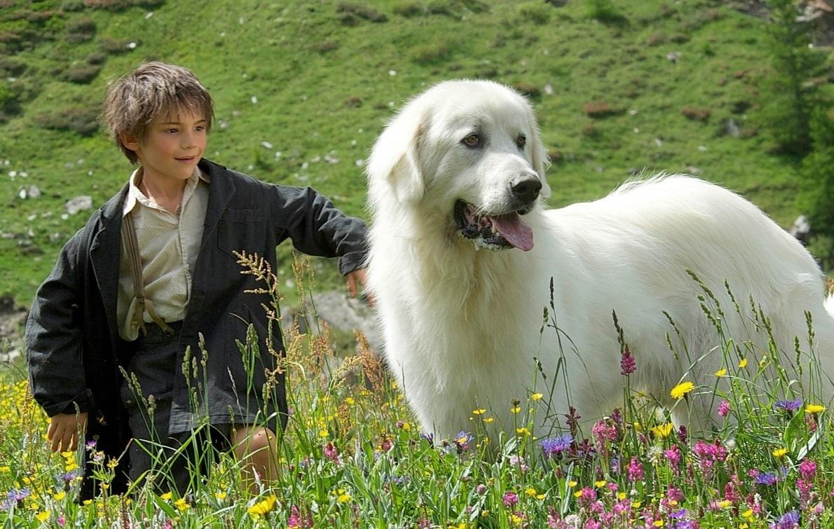 Белль и Себастьян кадр 6