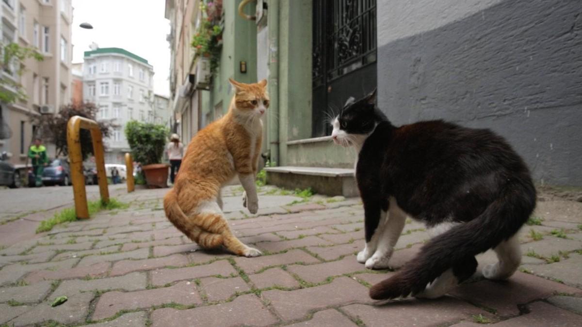 Город кошек кадр 1