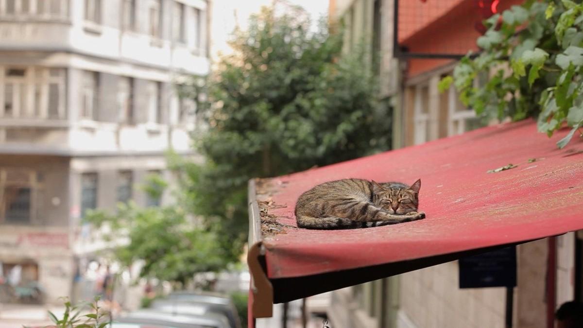 Город кошек кадр 2