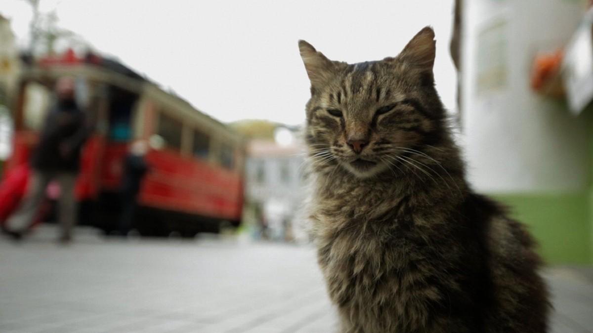 Город кошек кадр 3