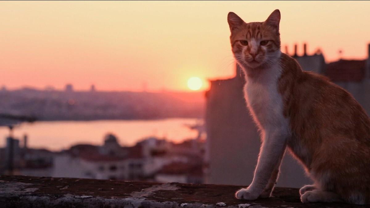Город кошек кадр 4