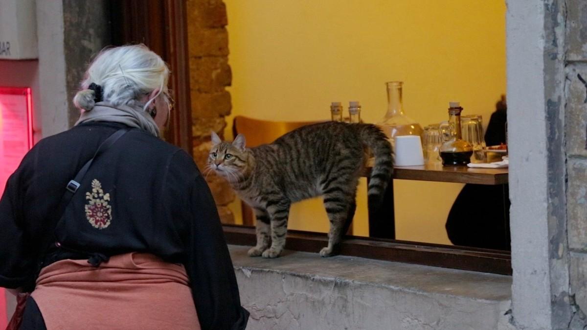 Город кошек кадр 5
