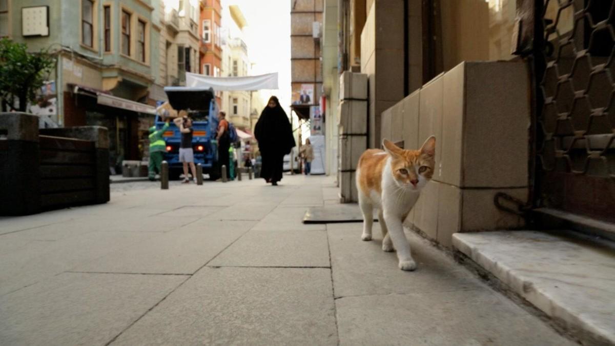Город кошек кадр 6