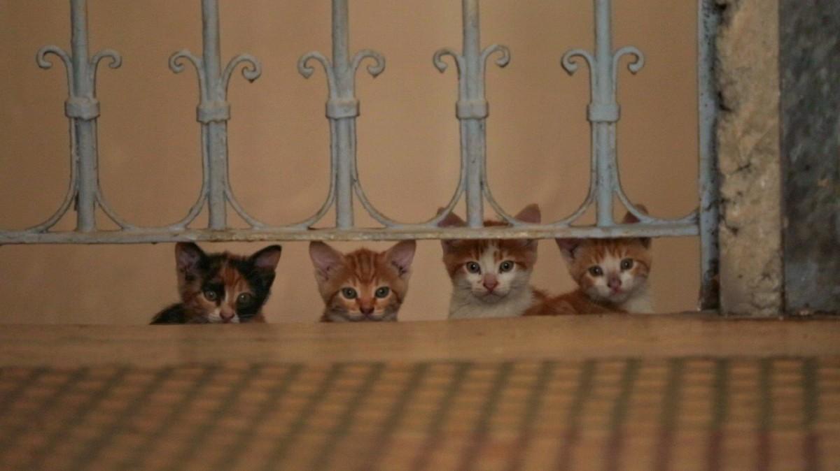 Город кошек кадр 8