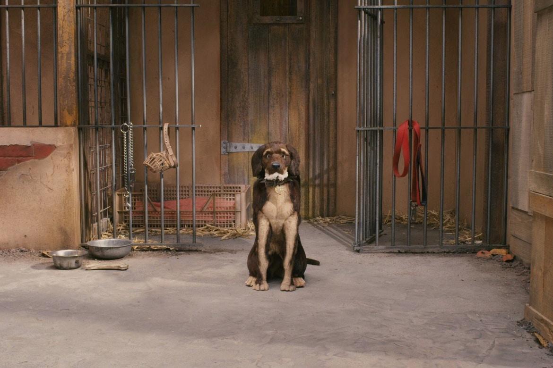 Остров собак кадр 2