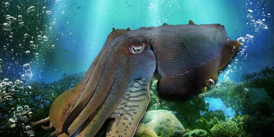 смотреть На глубине морской 3D в кинотеатрах